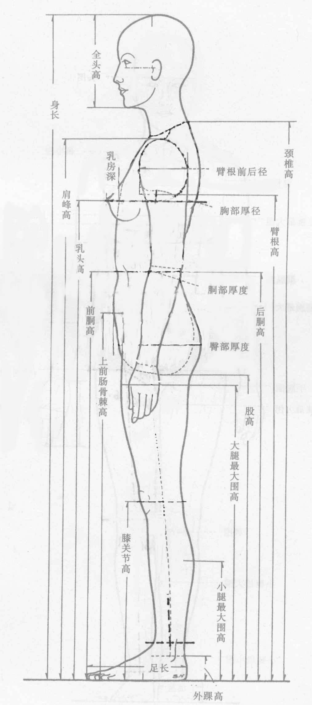 人体结构赏析_服装知识库